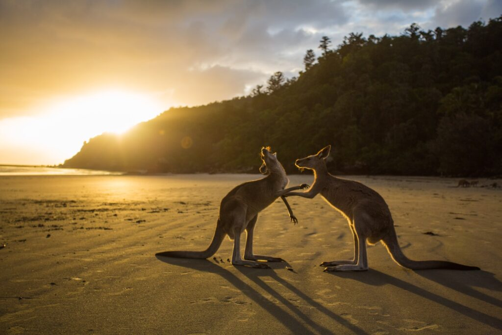 What Are The Unique Places To Visit In Queensland?