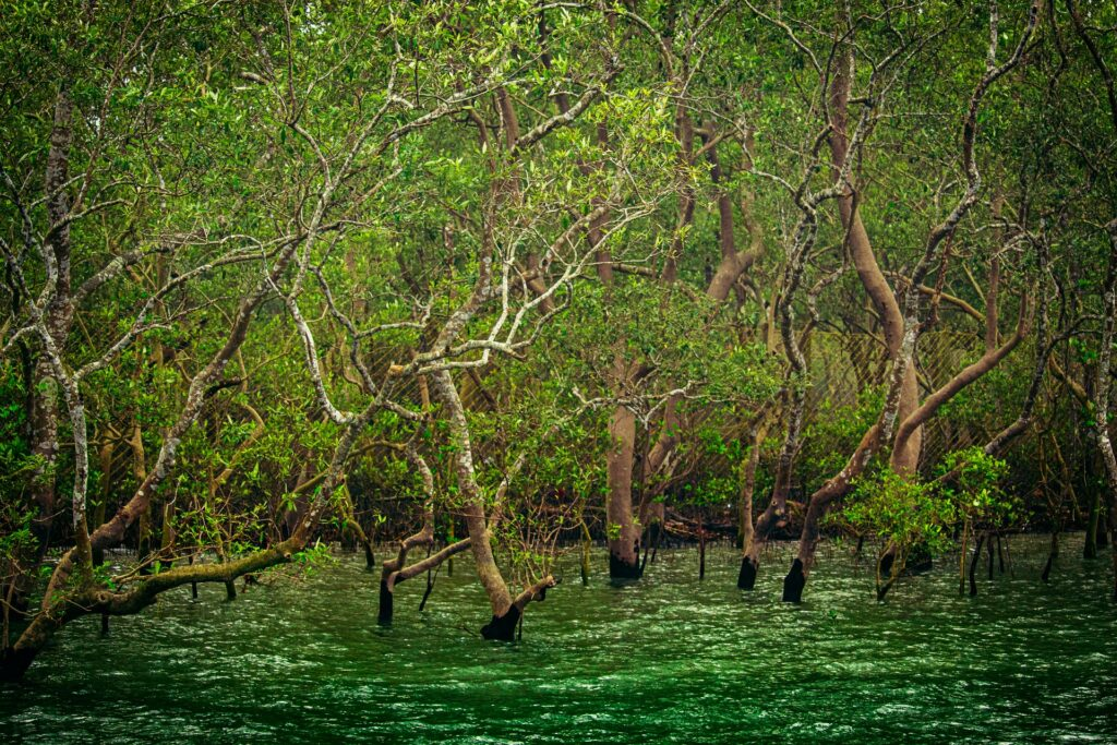 What Are The 5 Most Beautiful Places In West Bengal